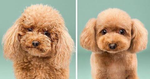 Lowongan Pekerjaan Groomer dan Asisten Groomer Anjing