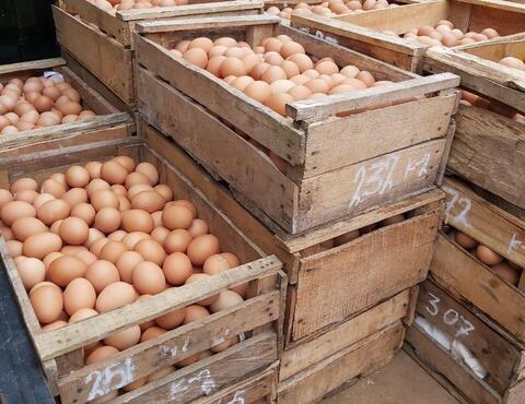 Telur Ayam Negeri Berkualitas. Harga Murah.