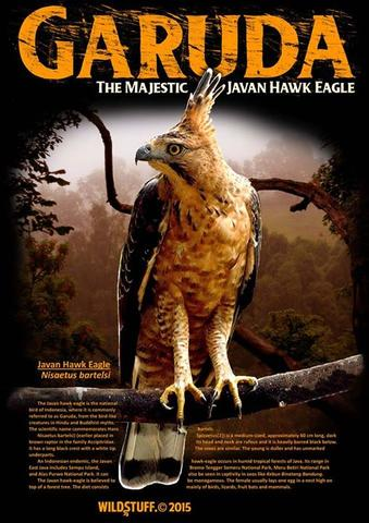 PRE ORDER Tshirt GARUDA – THE MAJESTIC JAVAN HAWK EAGLE by : Wildstuff.