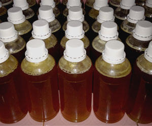Madu Kapas Asli (Pure Honey Bee)