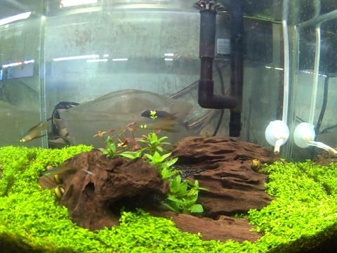 Setting Aquascape - Aquascape Ideas