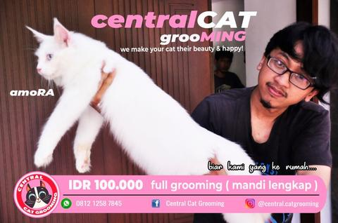 Jasa Cat Grooming Home Service Jakarta - Central Cat Grooming