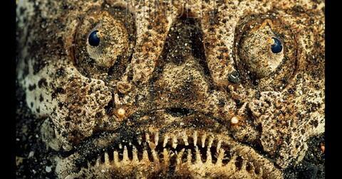 5-wujud-ikan-aneh-yang-hidup-di-kedalaman-laut