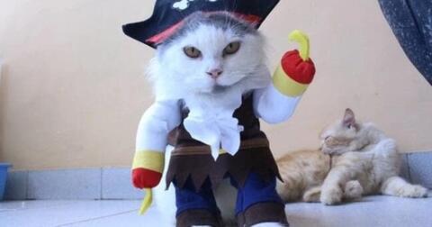 kostum-unik-buat-kucing-kesayangan-dijamin-pasti-bakalan-punya-kebanggaan