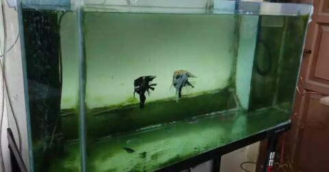ternyata-merawat-aquarium-dan-ikan-hias-itu-tidak-semudah-yang-dibayangkan