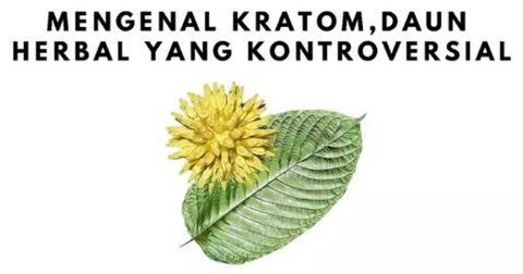 mengenal-kratom-daun-herbal-yang-kontroversial