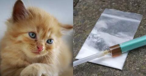 dijebloskan-penjara-gegara-selundupkan-narkoba-kucing-ini-berhasil-melarikan-diri