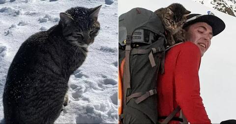 greget-kucing-ini-ditemukan-nyasar-selama-4-hari-di-gunung-bersalju