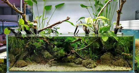 buat-paludarium-yuk-ekosistem-buatan-yang-bikin-interior-rumah-makin-cantik-amp-asri