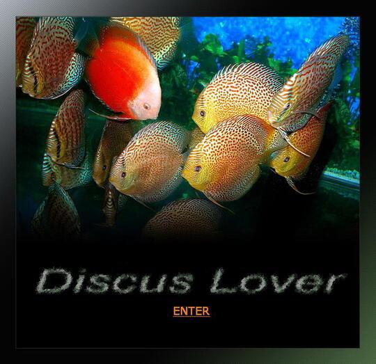 Discus Lovers ( Regenerated ) - Part 3