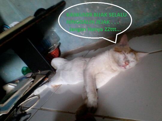 Muezza Kucing Kesayangan Nabi Muhammad Saw Kaskus