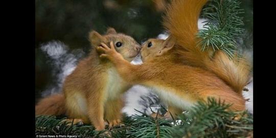 64+ Gambar Binatang Romantis Lucu Kekinian