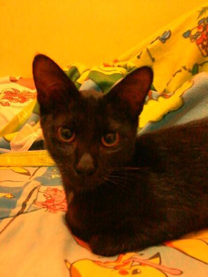 Download 76+  Gambar Kucing Bergaya Lucu HD