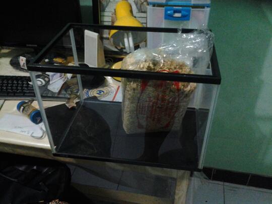 Terjual Sale Akuarium Aquarium Gex 60cm X 35cm X 30cm