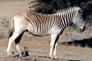 65+ Gambar Binatang Yang Sudah Punah HD