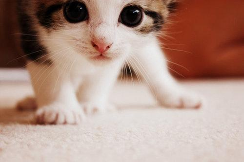 Kucing Dalam Agama Islam Ilmu Pengetahuan Dan Faedah Kaskus