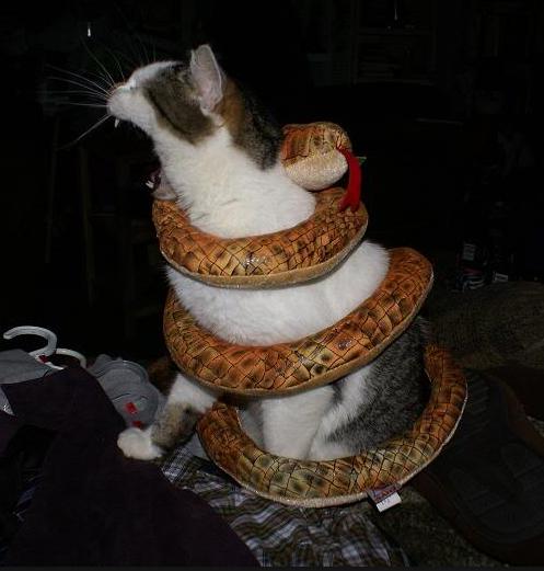 Unduh 63+  Gambar Kucing Dan Ular Paling Imut Gratis