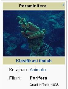 1010+ Gambar Jenis Hewan Porifera Terbaik