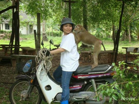 sekolah unik kera di thailand
