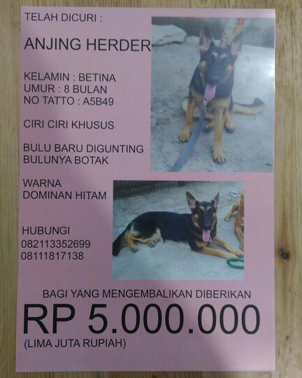 Help Anjing Herder Dicuri Hadiah Rp 5 000 000 Kaskus