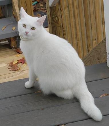 Gambar Kucing Umur 3 Minggu godean.web.id