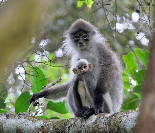 52+ Gambar Hewan Di Pulau Jawa Gratis