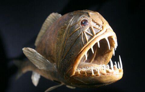 Ikan Penghuni Dasar Laut