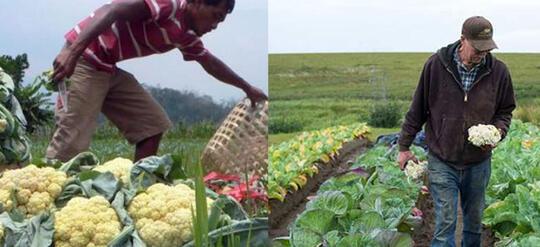 Petani Indonesia vs Petani Luar Negeri, Mana Yang Paling Makmur?