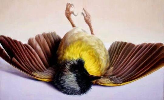 Burung Mati Di Daerah Perkotaan Kok Tak Pernah Terlihat Bangkainya Kaskus
