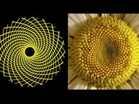 10 Bentuk Keindahan Matematika Di Alam
