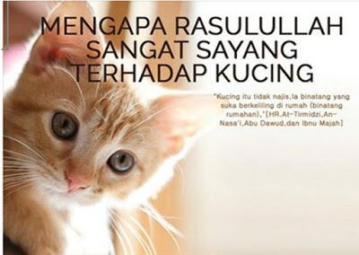 Hukum Memelihara Kucing Dalam Islam Kaskus