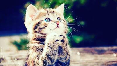 Inilah Nama Kucing Nabi Muhammad Saw Kaskus