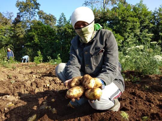 [PENAWARAN INVESTASI] Membutuhkan modal untuk sektor pertanian, profit 10-30%
