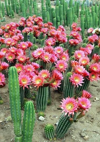 filosofi kaktus kehidupan real banget gan kaskus
