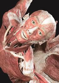 Museum Mayat Body Worlds