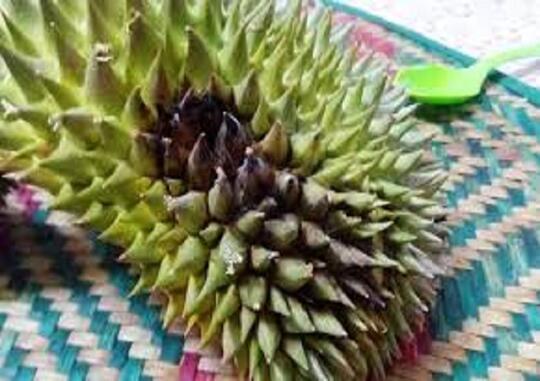 Tips memilih durian yang bagus dan manis
