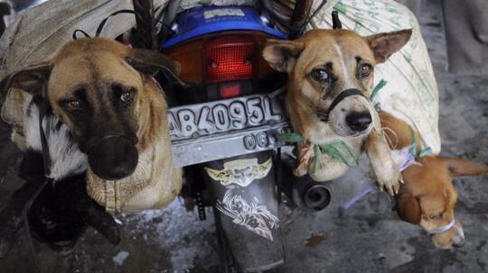 5 Negara Konsumsi Daging Anjing Tertinggi Di Dunia