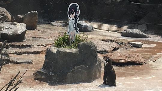 """WADUH! Grape Kun,Seekor Penguin Yang Jatuh Cinta Sama """"ANIME CANTIK""""!"""