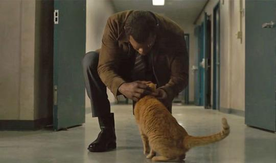 Kupas Misteri Kucing Alien 'Peliharaan' Captain Marvel?