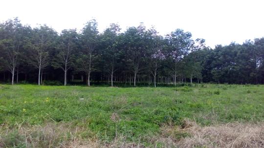 Pengalaman Ane Nyari Pokemon Di Pedalaman Kalimantan