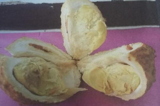 Nggak Semua Durian Itu Berduri, Ini Buktinya