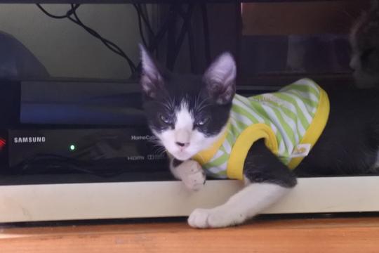 Balasan Dari Freddie Mercury Dan Romantismenya Dengan Kucing Kaskus