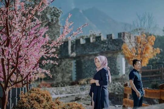 7 Tempat Wisata Di Indonesia Dengan Spot Bunga Sakura Cantik