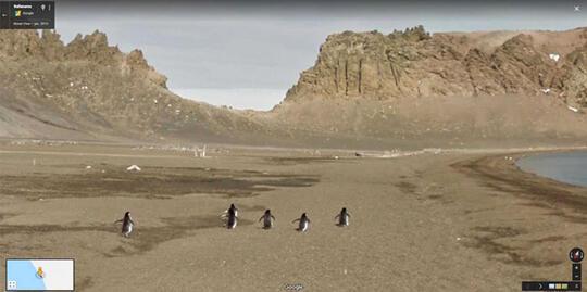 Keren Abis Ini Dia Pose Menakjubkan Hewan yang Tertangkap Kamera Google View Street
