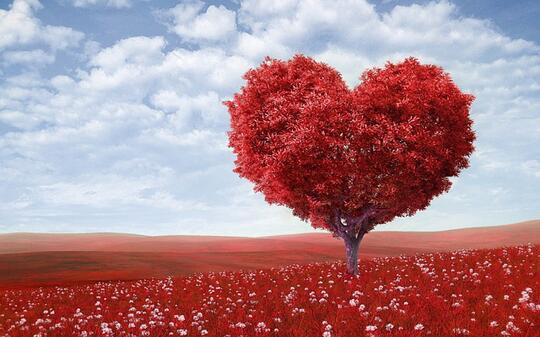 Cinta Terbit Saat Rembulan Redup