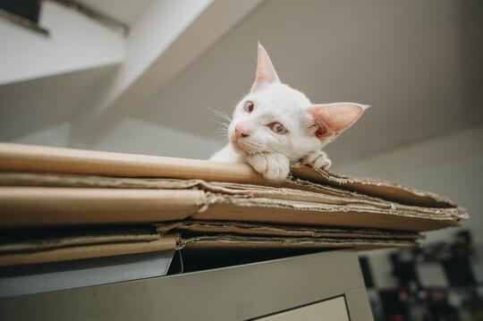 Cari Aman hingga Kehangatan, Alasan Kucing Suka Ngumpet dalam Kardus