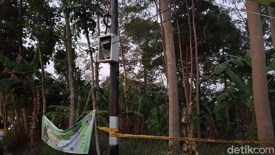 Bukan Sabotase, Blackout Jakarta Akibat 'Ulah' Pepohonan di Semarang