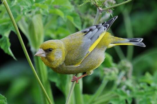 Populasi Burung di Inggris Meningkat Karena Ini