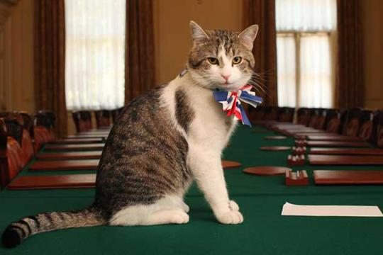 Layaknya Manusia, Kucing-Kucing Lucu Ini Juga Punya Pekerjaan, Loh