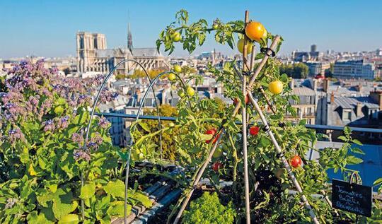 Anjay! 2020 Atap Gedung-Gedung Di Negara Ini Siap Dijadikan Kebun